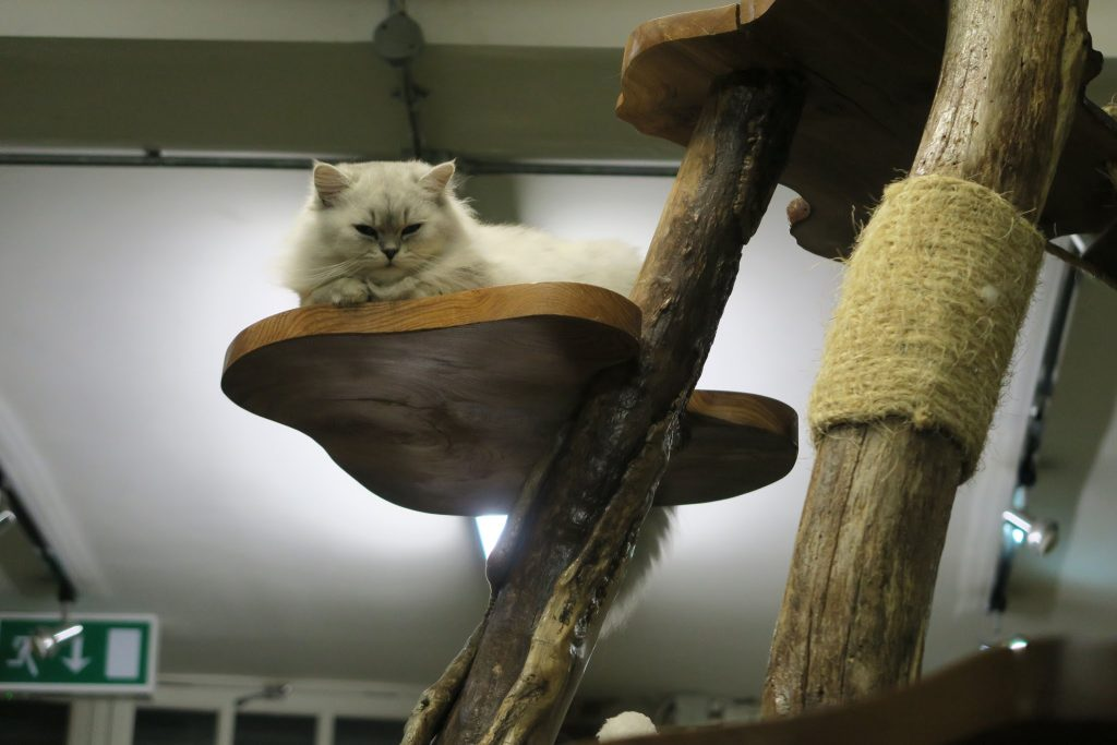 london cat village