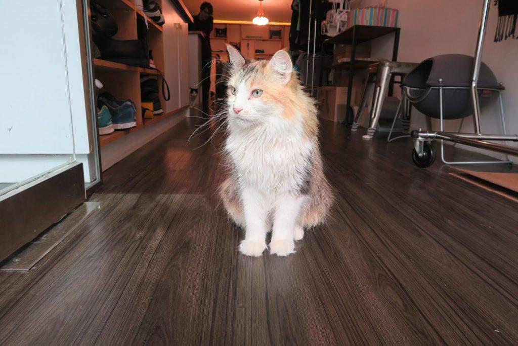 meow parlour